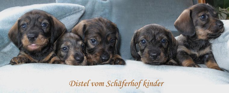 Distel-babies