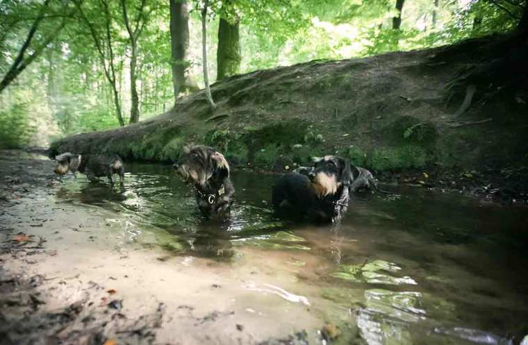 dirty-pool