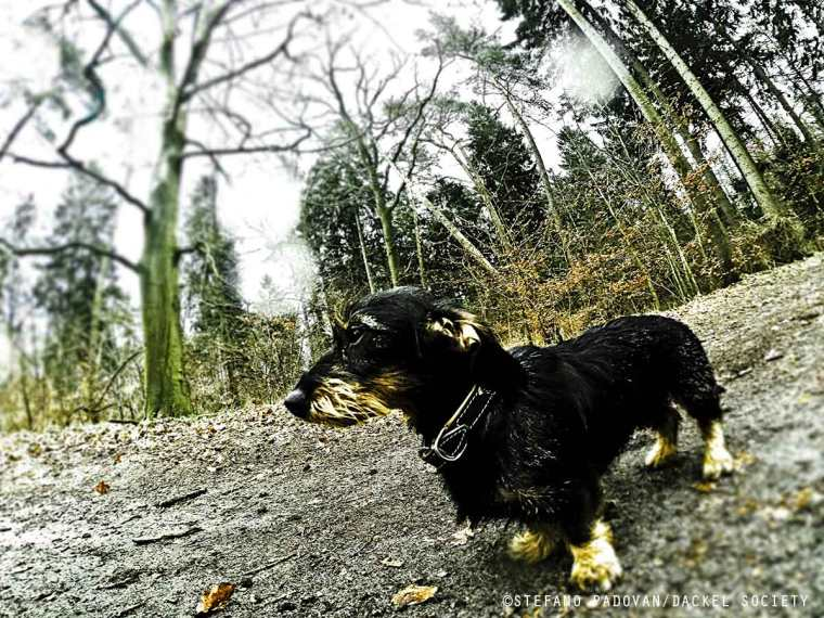 blackprowler