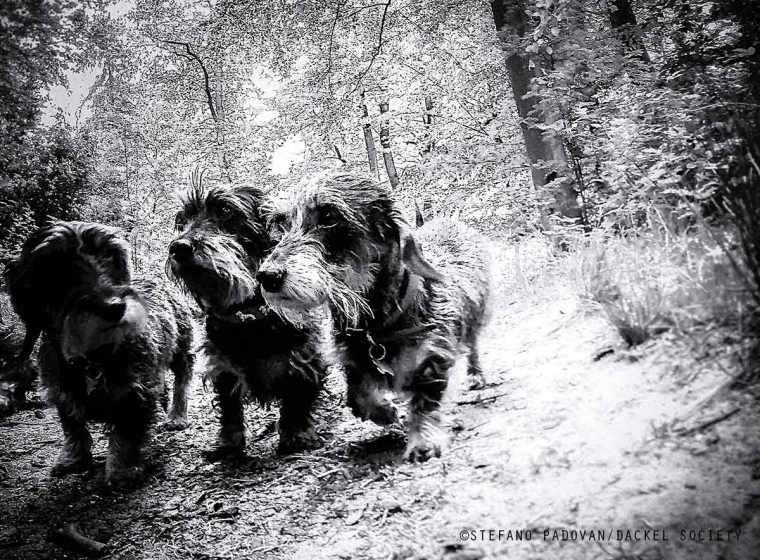 night-hunters