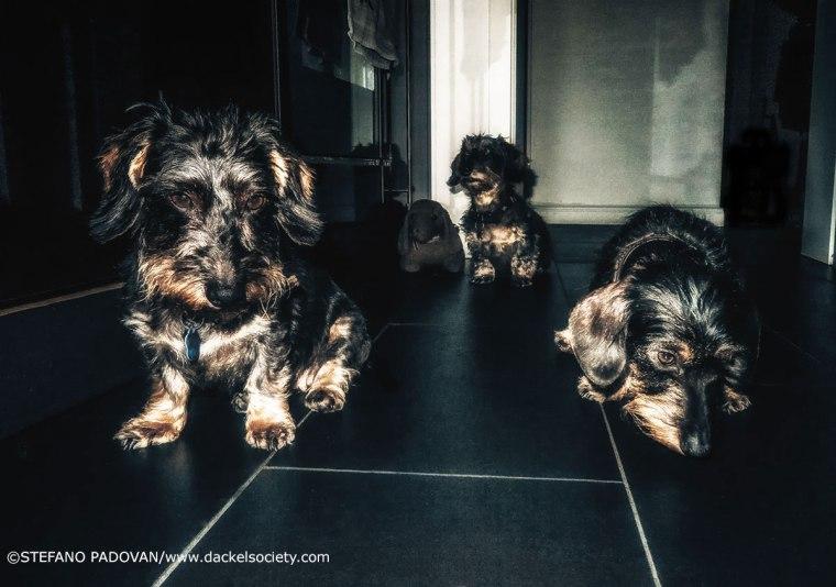 nightprowlers