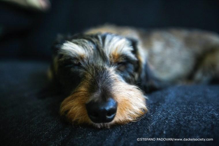 Sleeping-Luna1